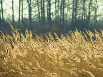 Autumn sketches. The yellow grass waves on an autumn wind Stock Photography