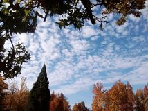 Autumn Skies Beyond as árvores foto de stock