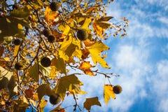 Autumn Sky Foto de Stock Royalty Free