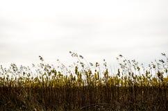 Autumn Sky Immagini Stock