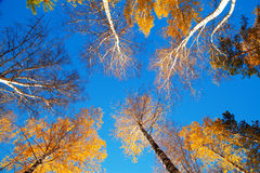 Autumn sky Royalty Free Stock Image