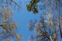 Autumn sky Royalty Free Stock Photo