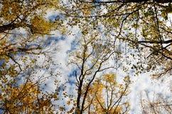 Autumn Sky Foto de Stock