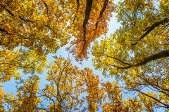Autumn Sky Royaltyfri Fotografi