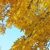 Autumn Sky Foto de archivo