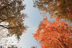 Autumn Sky immagini stock libere da diritti