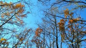 Autumn Sky Fotografering för Bildbyråer
