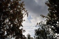 Autumn sky. Autumn sky is a beautiful screensaver for your gadget Stock Photos