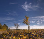 Autumn and sky. Royalty Free Stock Images