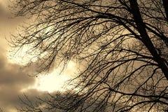Autumn Sky Behind Dormant Branches pesado foto de stock royalty free