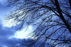 Autumn Sky Behind Dormant Branches pesado fotografia de stock royalty free