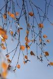 Autumn sky branch leaves orange Stock Images