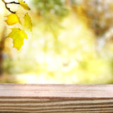Autumn sky and foliage with aged wooden boards. Aged and rustic wooden boards with an autumn sky and foliage background Royalty Free Stock Image