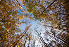 Autumn sky in forest Stock Image