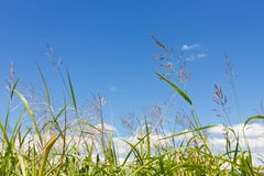 Autumn sky and grass Royalty Free Stock Photos