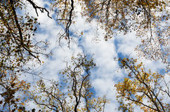 Autumn sky Stock Images