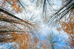 Autumn sky and tree tops Stock Photography
