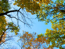 Autumn sky. The trees on the background of the autumn sky Stock Images