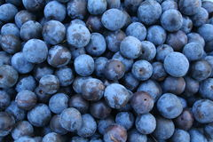 Autumn sloes. Background. Blackthorn Stock Photo
