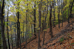 Autumn slope Royalty Free Stock Images
