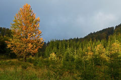Autumn in Slovak Mountains Stock Image