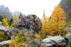 Autumn Smile av Shkhelda Royaltyfri Bild