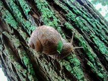 Autumn, snail, moss, tree bark, grape snail royalty free stock image
