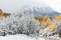 Autumn Snow. The first snow of Autumn on Last Dollar Road, near Ridgway, Colorado stock images