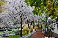 Autumn and snow. 2014.10.11 on China autumn and snow Royalty Free Stock Photo