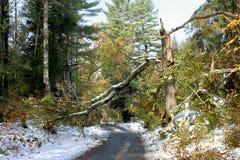 Autumn snow storm damage. Broken tree from autumn snow storm stock photo