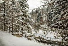 Autumn snow. royalty free stock photo