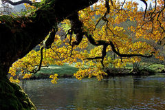 Autumn in Snowdonia Stock Image