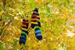 Autumn socks Stock Photos