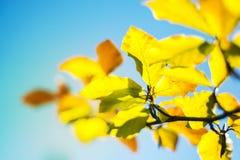 Autumn Soft Blurred Background astratto Fotografia Stock Libera da Diritti