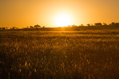Sunrise over the African plains Stock Photo