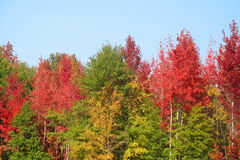 Autumn in South Carolina. Trees changing color in South Carolina Royalty Free Stock Photos