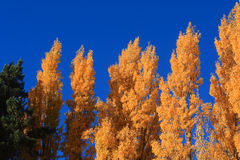 Autumn in South Island New Zealand. Royalty Free Stock Photo