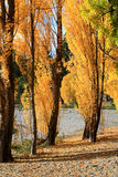 Autumn in South Island New Zealand. stock image