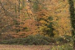 Autumn on Southampton Common royalty free stock image