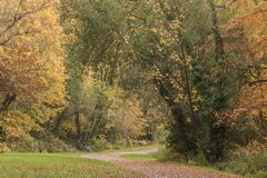 Autumn on Southampton Common royalty free stock images