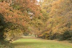 Autumn on Southampton Common royalty free stock photography