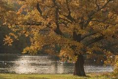 Autumn on Southampton Common stock images