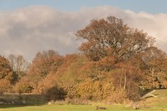 Autumn on Southampton Common royalty free stock image