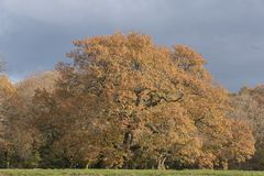 Autumn on Southampton Common royalty free stock photo