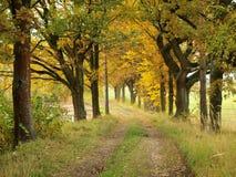 Autumn , southern Bohemia. Czech Republic Stock Photography