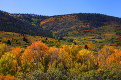 Autumn in Southern Colorado Stock Image