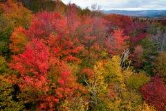 Autumn Spectacular Stock Images
