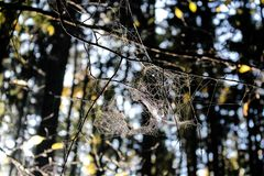 Autumn Spider Web Fotografia de Stock Royalty Free