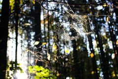 Autumn Spider Web Fotos de Stock Royalty Free