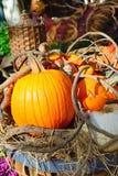 Autumn spirit Stock Image
